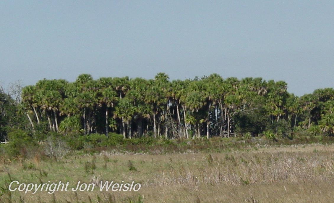 Florida Ecosystems Upland Habitats